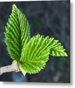 New Leaves Metal Print