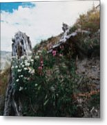 New Life Mt Saint Helens Wa Metal Print
