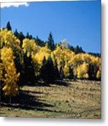 New Mexico Aspen Metal Print