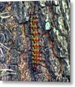 New Orleans Buck Moth Caterpillar Metal Print