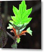 New Spring Leaf Metal Print