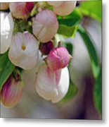 New Metal Print by The Forests Edge Photography - Diane Sandoval