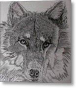 Wolf. Metal Print by Cynthia Adams