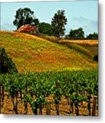 New Vineyard Metal Print by Gary Brandes