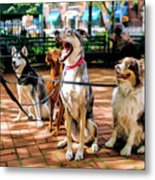 New York City Dog Walking Metal Print