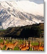 New Zealand Deer 3497 Metal Print