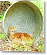 Newborn Fawn Finds Shelter In An Old Washtub Metal Print