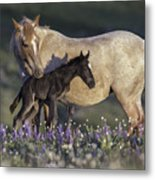 Newborn Filly At Dawn Metal Print