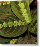 Nice Leaves Metal Print