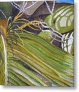 Nick's Coconuts Metal Print