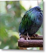 Nicobar Pigeon Metal Print