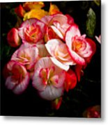Night Begonias Three Metal Print
