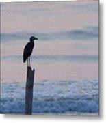 Night Heron Dawn Post Metal Print