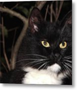 Night Hunter Metal Print