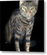 Night Vision Metal Print
