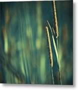 Night Whispers Metal Print by Aimelle