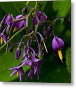 Nightshade Wildflowers #5607 Metal Print