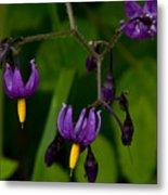Nightshade Wildflowers #5633 Metal Print