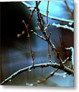Nighttime In The Garden Metal Print