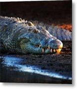 Nile Crocodile On Riverbank-1 Metal Print