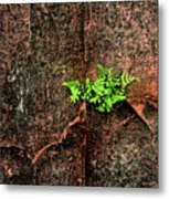 No Barriers To Growth Metal Print