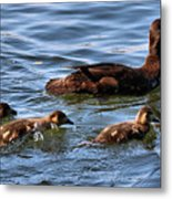 No Snacking Before Dinner Metal Print