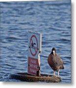 No Swimming Metal Print