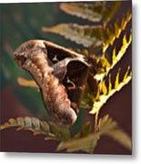 Nocturnal Moth Metal Print