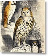 Nocturnal Scene With Three Owls Metal Print
