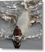 Noisy Sea Lion Metal Print