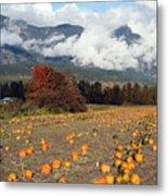 North Arm Farm Pumpkin Season Pemberton B.c Canada Metal Print