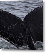 North Atlantic Humpback Metal Print