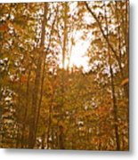 North Carolina Woods Metal Print