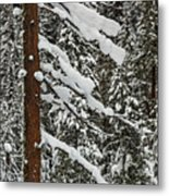 North Cascades Forest Metal Print