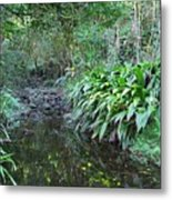 North Shore Forest Glade Metal Print
