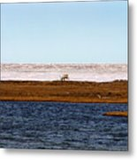 North Slope Metal Print