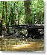 North West Florida Swamp Metal Print