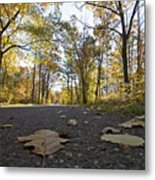 North Woods Road Two Metal Print