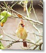 Northern Cardinal Female - Digital Painting Metal Print