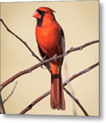 Northern Cardinal Profile Metal Print