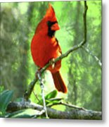 Northern Cardinal Proud Bird Metal Print