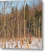Northern Forests Ghost In-flight Metal Print
