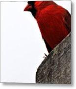 Northern Red Cardinal Metal Print
