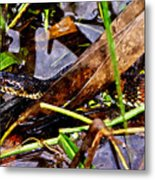 Northern Water Snake Metal Print