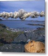 Norway Sheep Wool Getting Rolled Metal Print