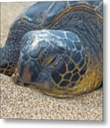 Nose In The Sand Metal Print