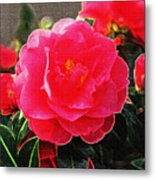 Not A Rose Metal Print