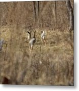 Nothing But White Tails Metal Print