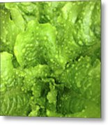 Nourish In Green Metal Print