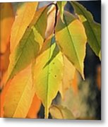 November Colors Metal Print
